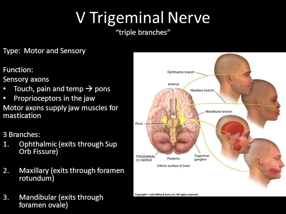 V Trigeminal Nerve triple branches