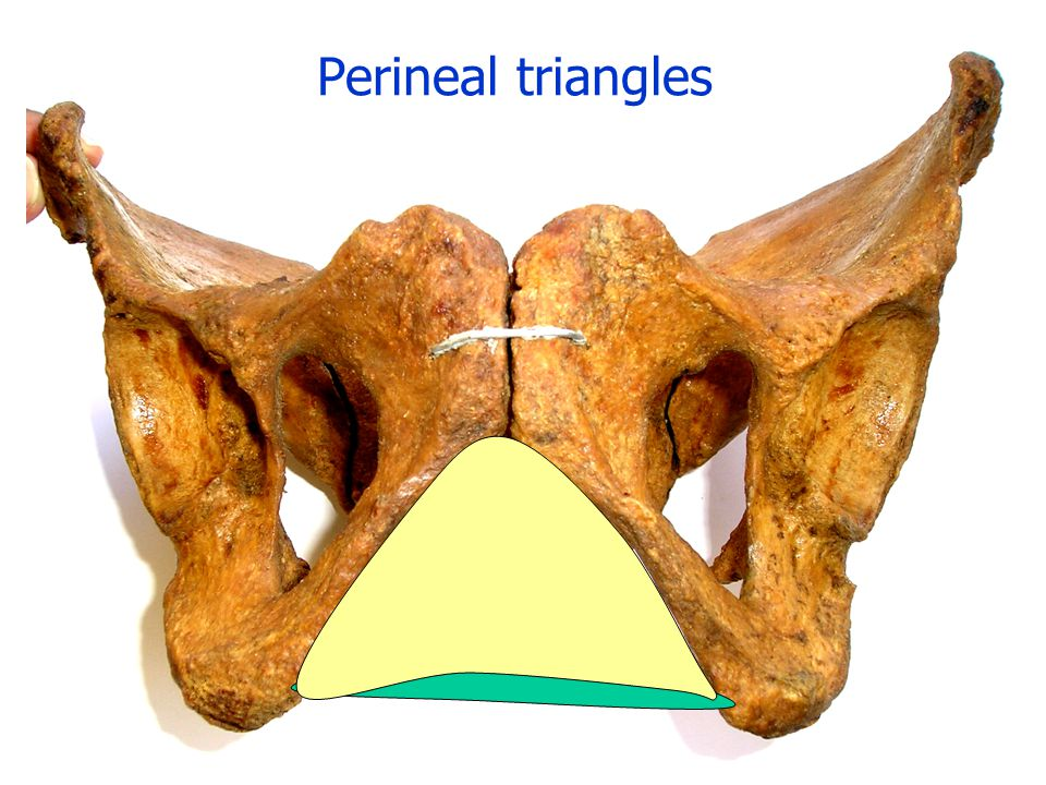 Perineal triangles