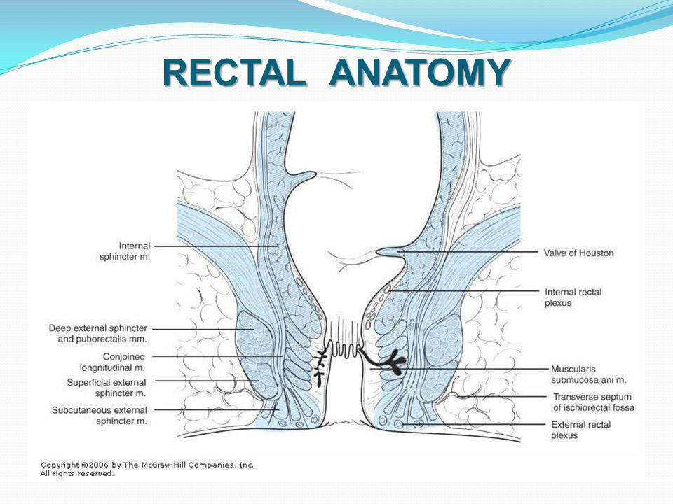 RECTAL ANATOMY