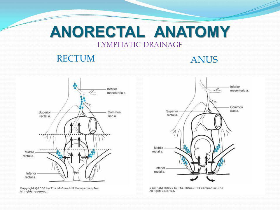ANORECTAL ANATOMY LYMPHATIC DRAINAGE