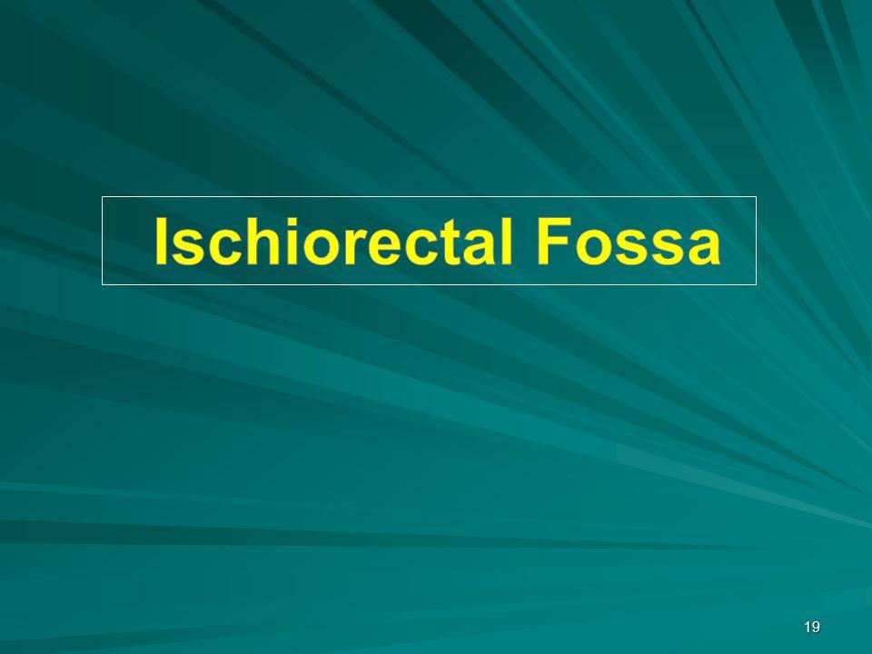Ischiorectal Fossa
