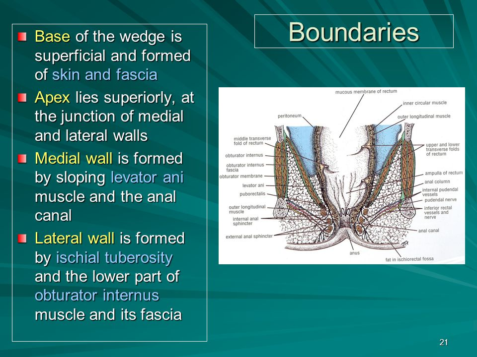 Boundaries Base of the wedge is superficial and formed of skin and fascia. Apex lies superiorly, at the junction of medial and lateral walls.