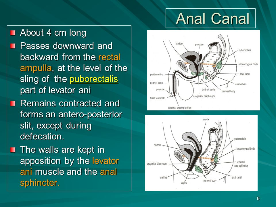Anal Canal About 4 cm long