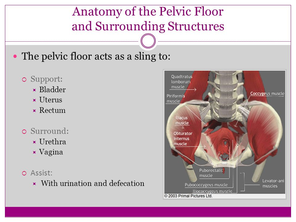Anatomy of the Pelvic Floor and Surrounding Structures