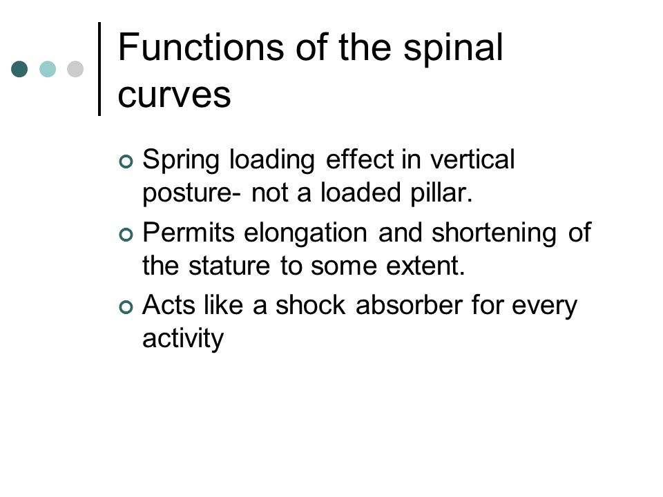 Functions of the spinal curves