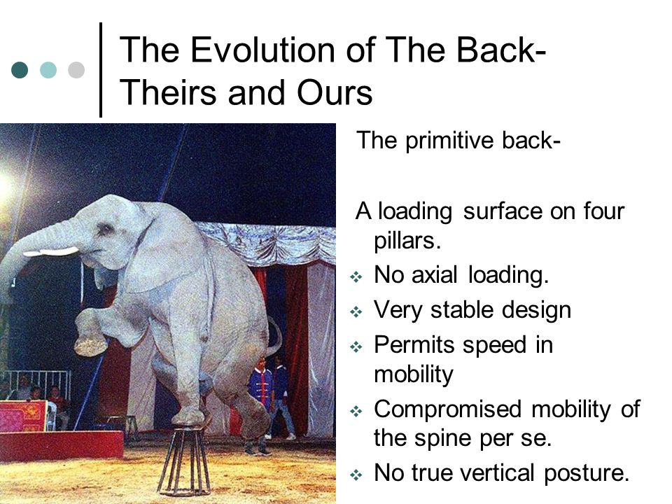 The Evolution of The Back- Theirs and Ours