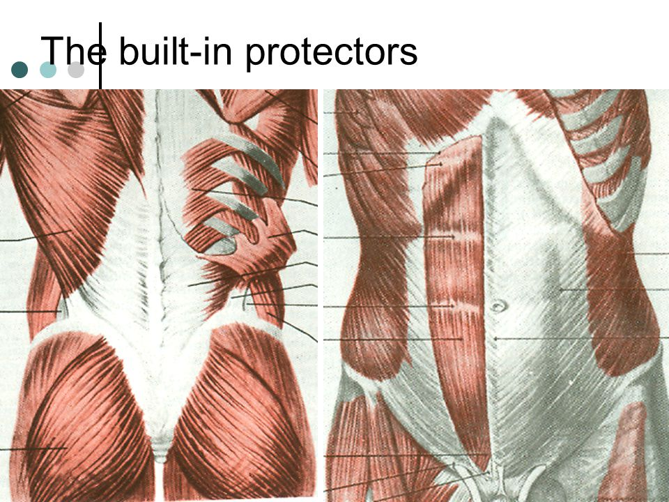 The built-in protectors