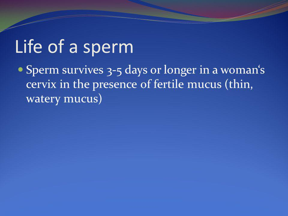 Life of a sperm Sperm survives 3-5 days or longer in a woman's cervix in the presence of fertile mucus (thin, watery mucus)