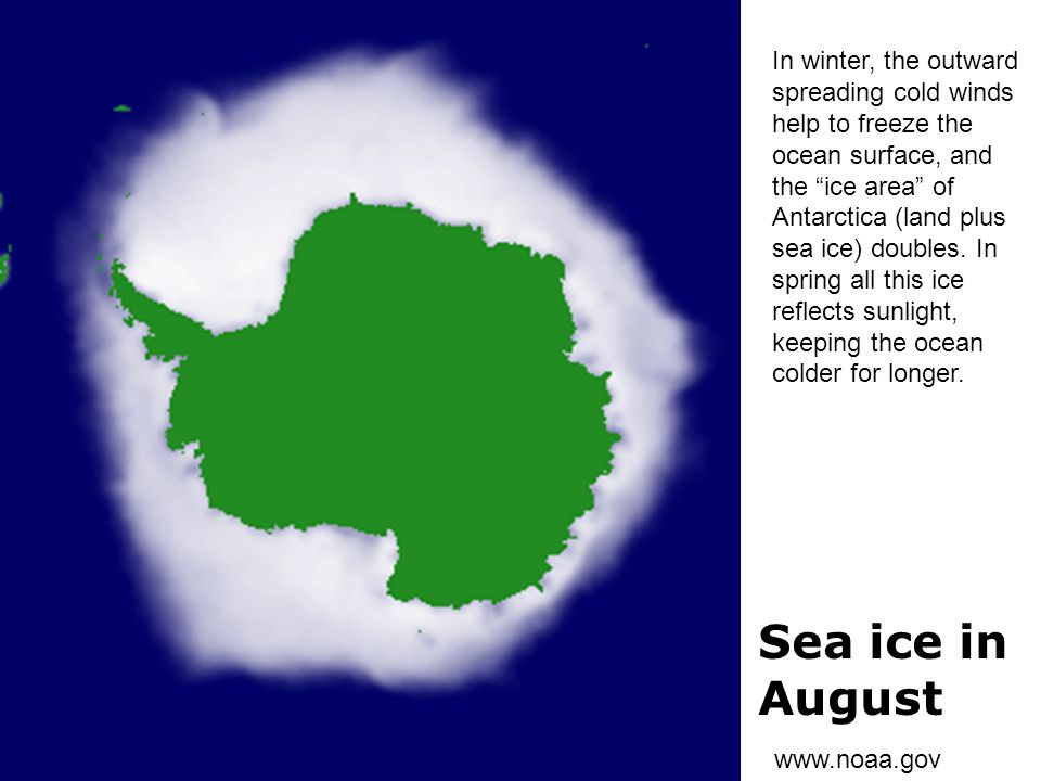 Sea ice in August In winter, the outward spreading cold winds
