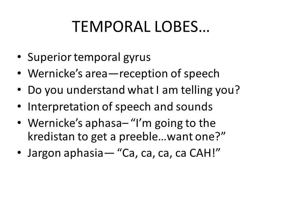 TEMPORAL LOBES… Superior temporal gyrus