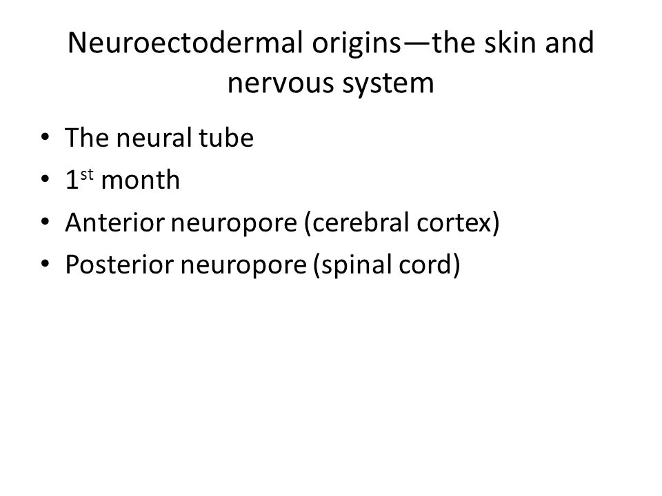 Neuroectodermal origins—the skin and nervous system