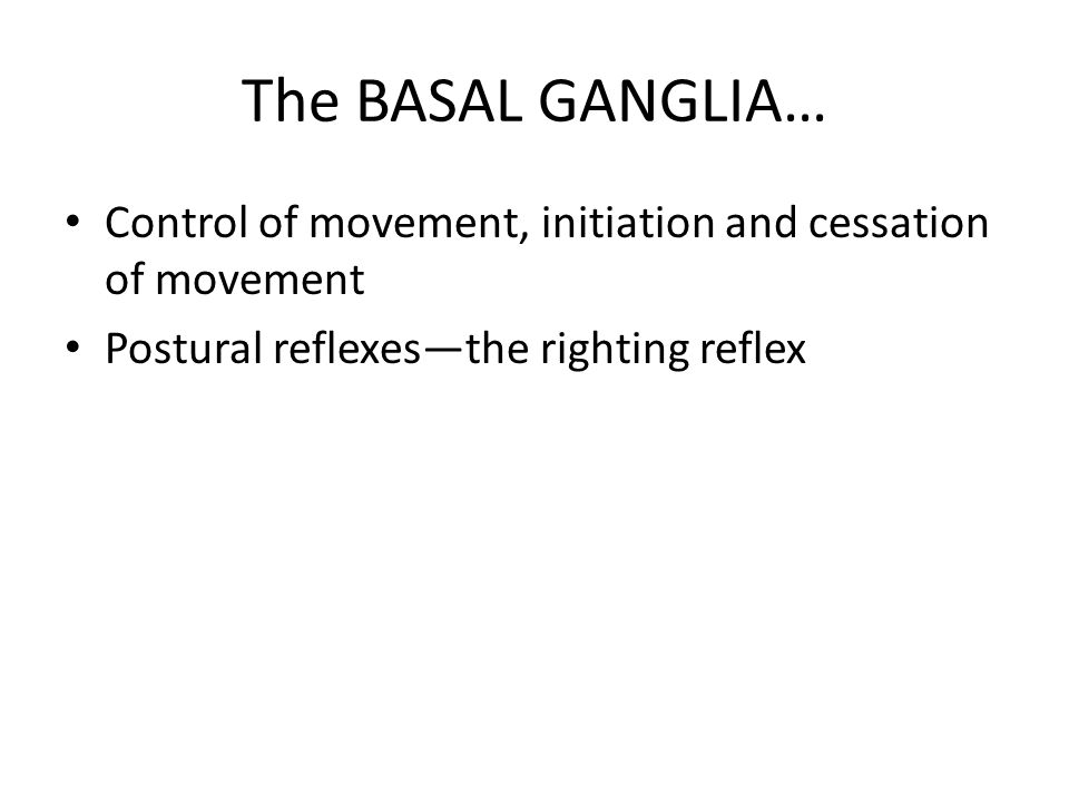 The BASAL GANGLIA… Control of movement, initiation and cessation of movement.