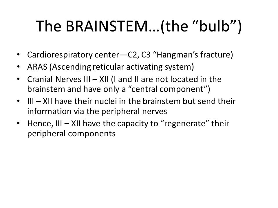 The BRAINSTEM…(the bulb )