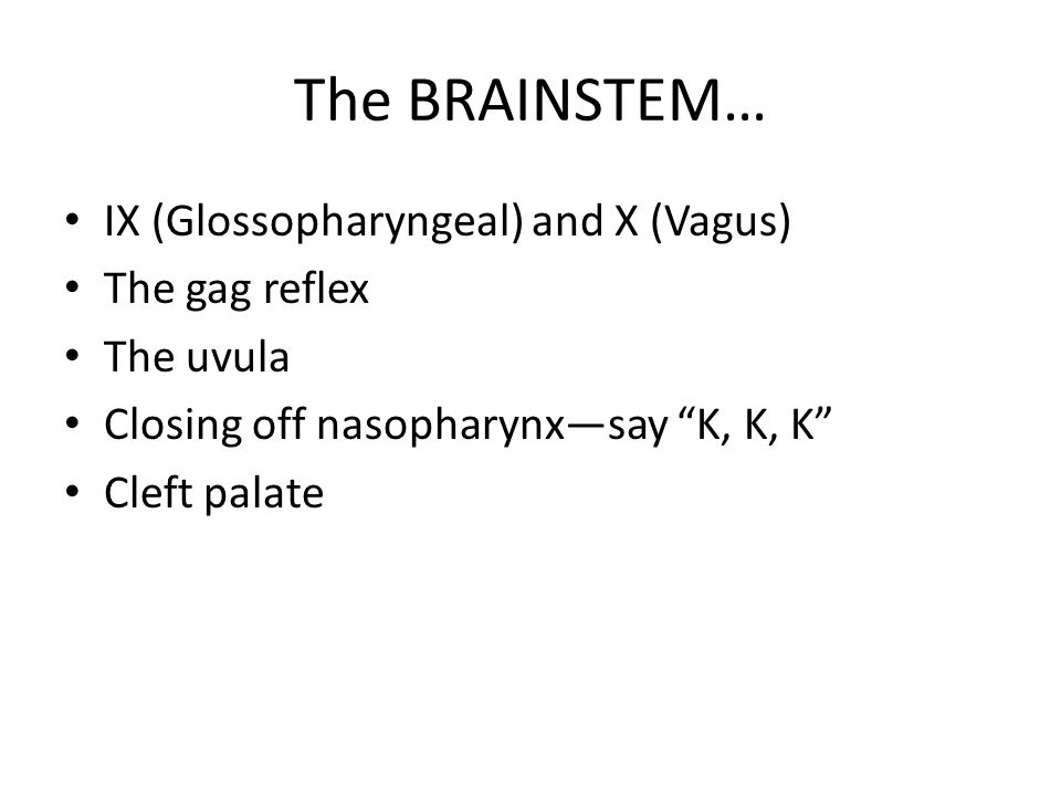 The BRAINSTEM… IX (Glossopharyngeal) and X (Vagus) The gag reflex