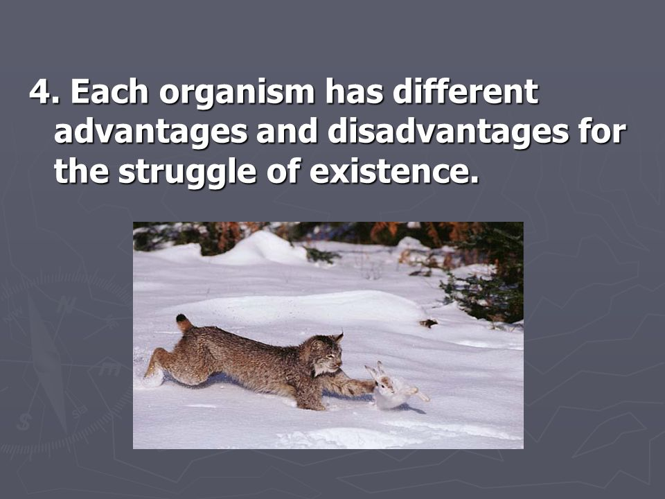 4. Each organism has different advantages and disadvantages for the struggle of existence.
