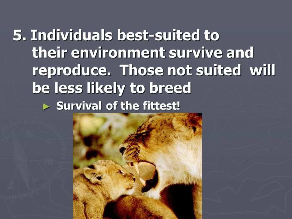 5. Individuals best-suited to their environment survive and reproduce