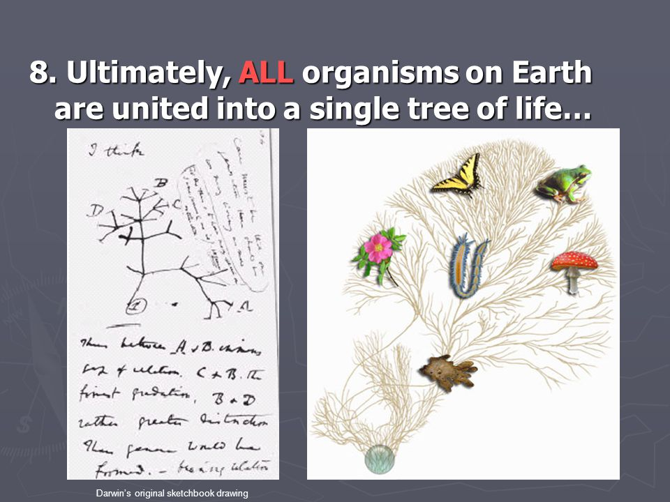 8. Ultimately, ALL organisms on Earth are united into a single tree of life…