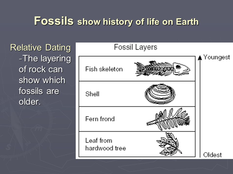 Fossils show history of life on Earth