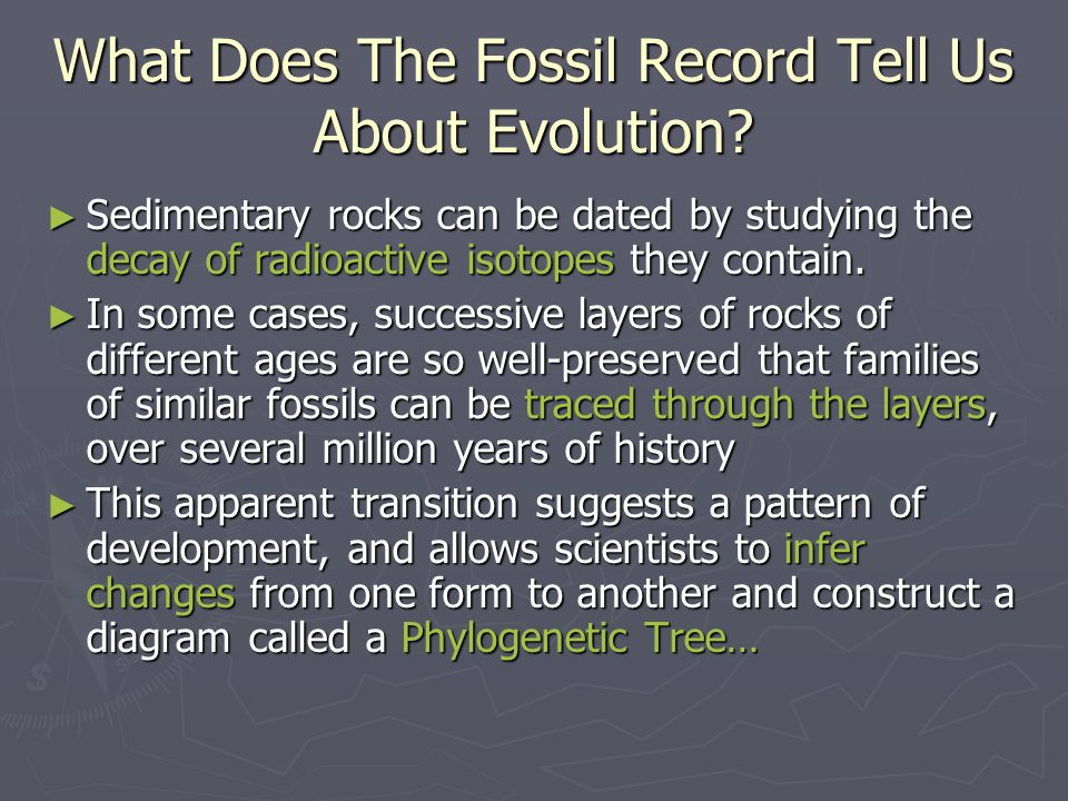 What Does The Fossil Record Tell Us About Evolution