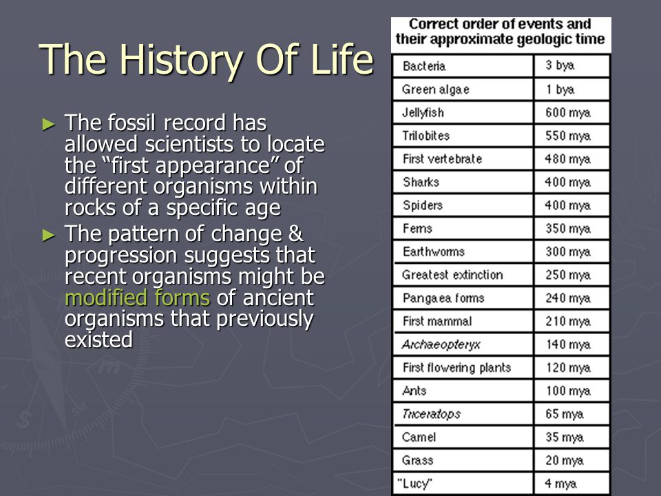 The History Of Life The fossil record has allowed scientists to locate the first appearance of different organisms within rocks of a specific age.