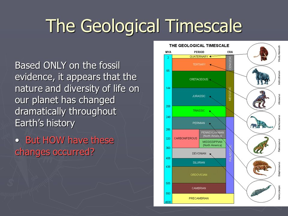 The Geological Timescale