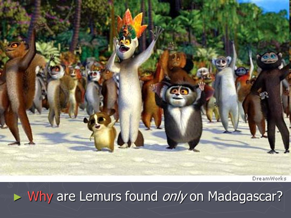 Why are Lemurs found only on Madagascar