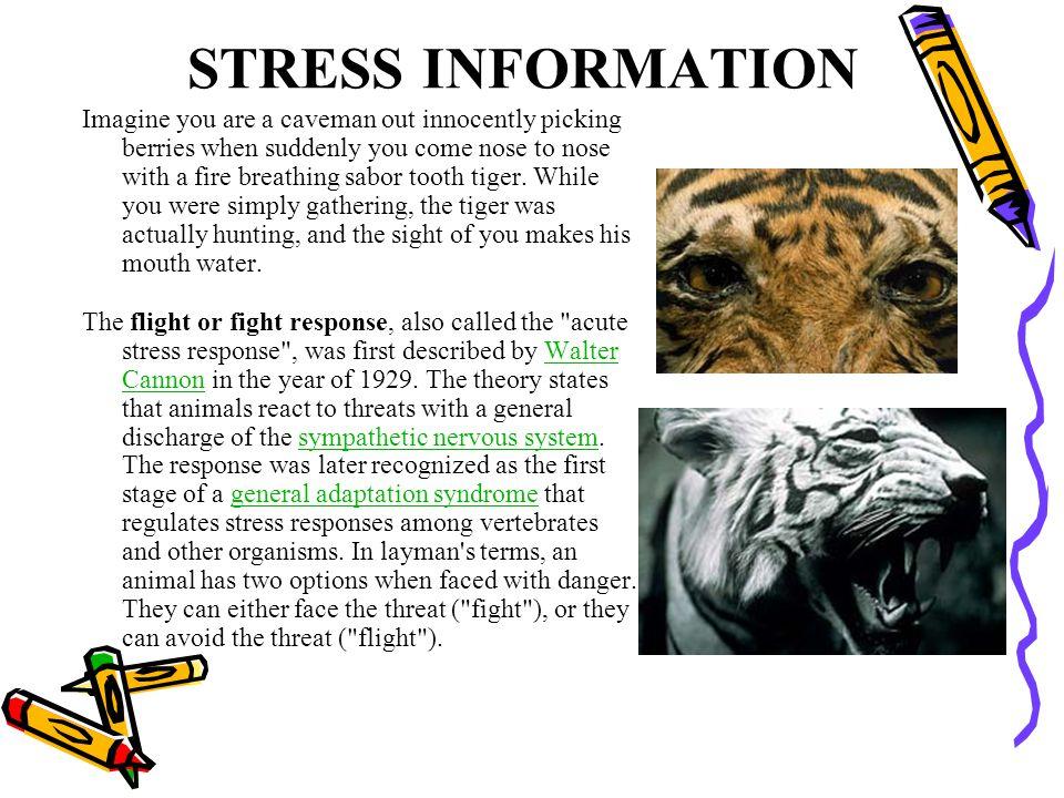 STRESS INFORMATION