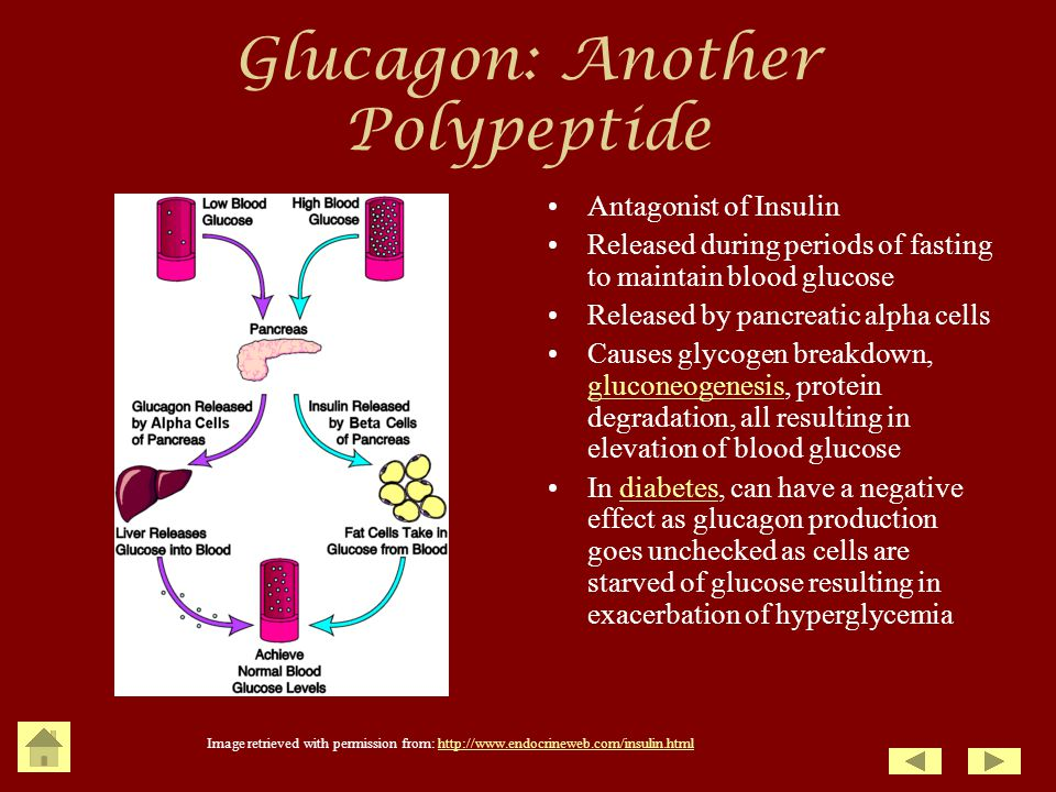 Glucagon: Another Polypeptide