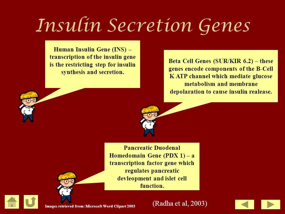 Insulin Secretion Genes