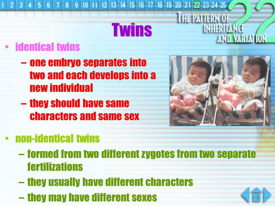 Twins identical twins. one embryo separates into two and each develops into a new individual. they should have same characters and same sex.
