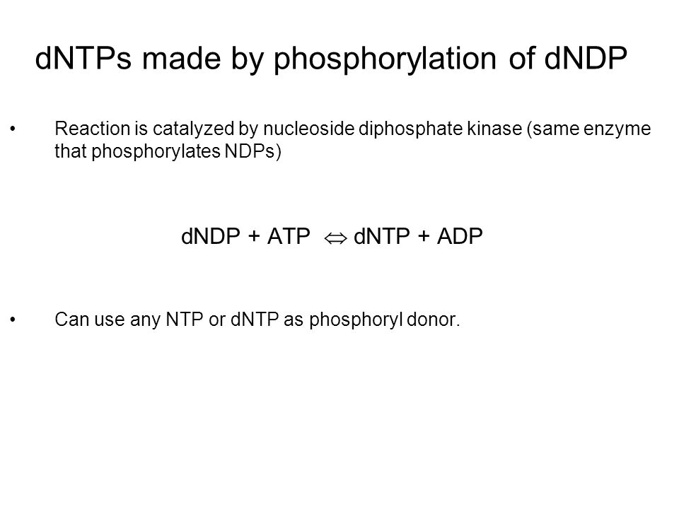 dNTPs made by phosphorylation of dNDP