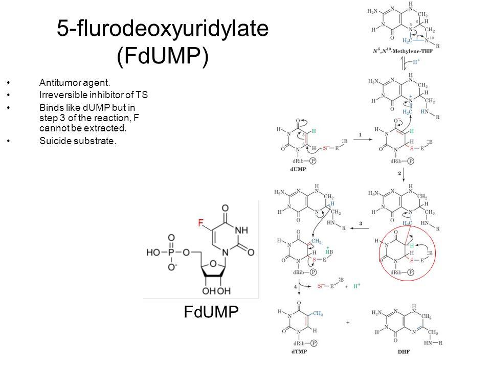 5-flurodeoxyuridylate (FdUMP)