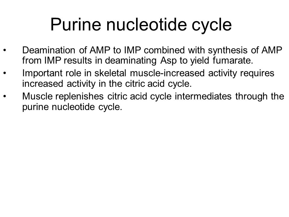 Purine nucleotide cycle