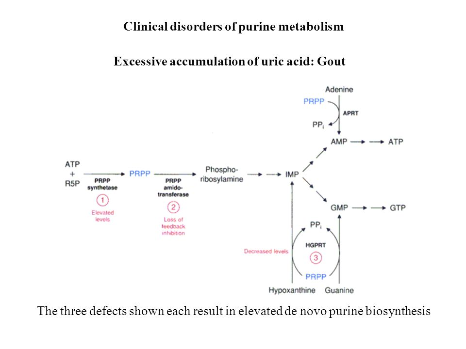 Clinical disorders of purine metabolism