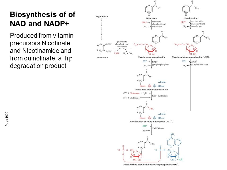 Biosynthesis of of NAD and NADP+