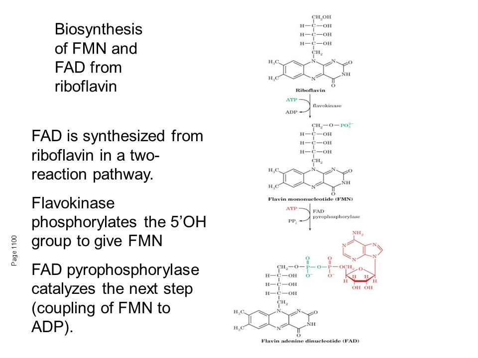 Biosynthesis of FMN and FAD from riboflavin