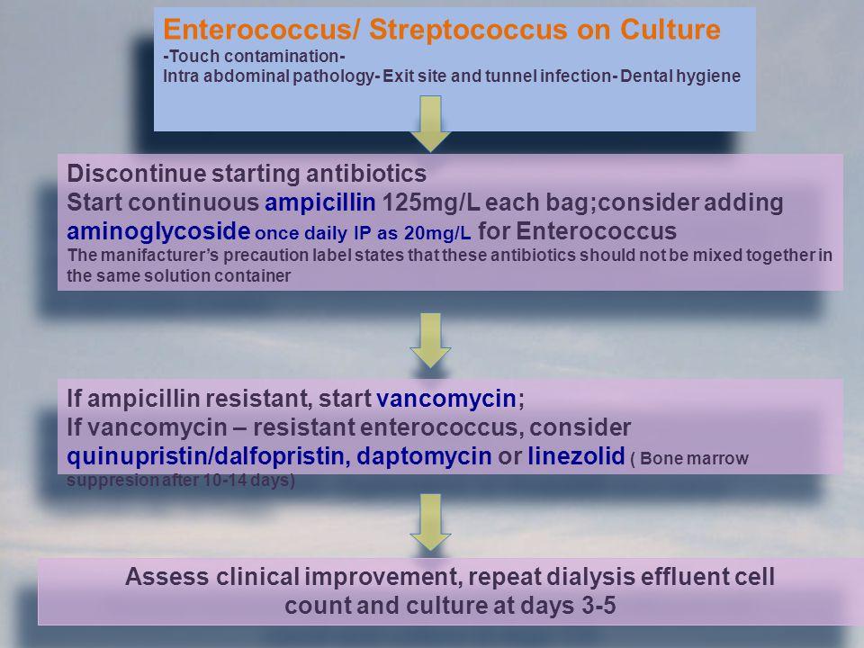 Enterococcus/ Streptococcus on Culture