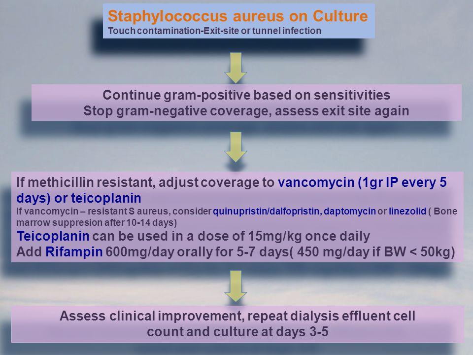 Staphylococcus aureus on Culture