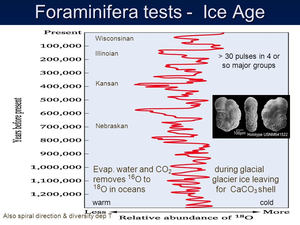 Foraminifera tests - Ice Age