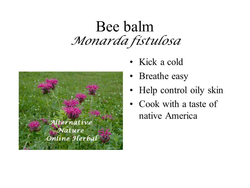 Bee balm Monarda fistulosa