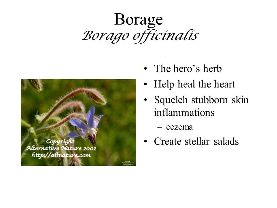Borage Borago officinalis