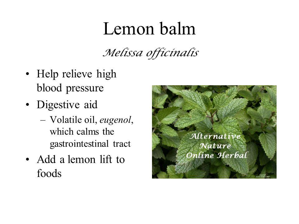 Lemon balm Melissa officinalis