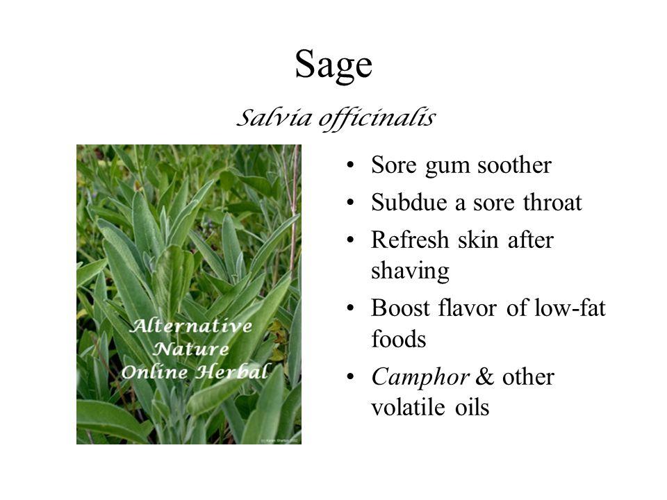 Sage Salvia officinalis