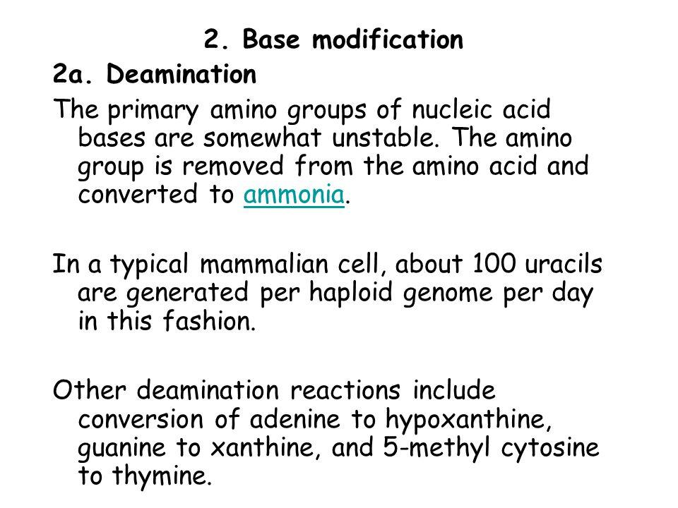 2. Base modification 2a. Deamination.
