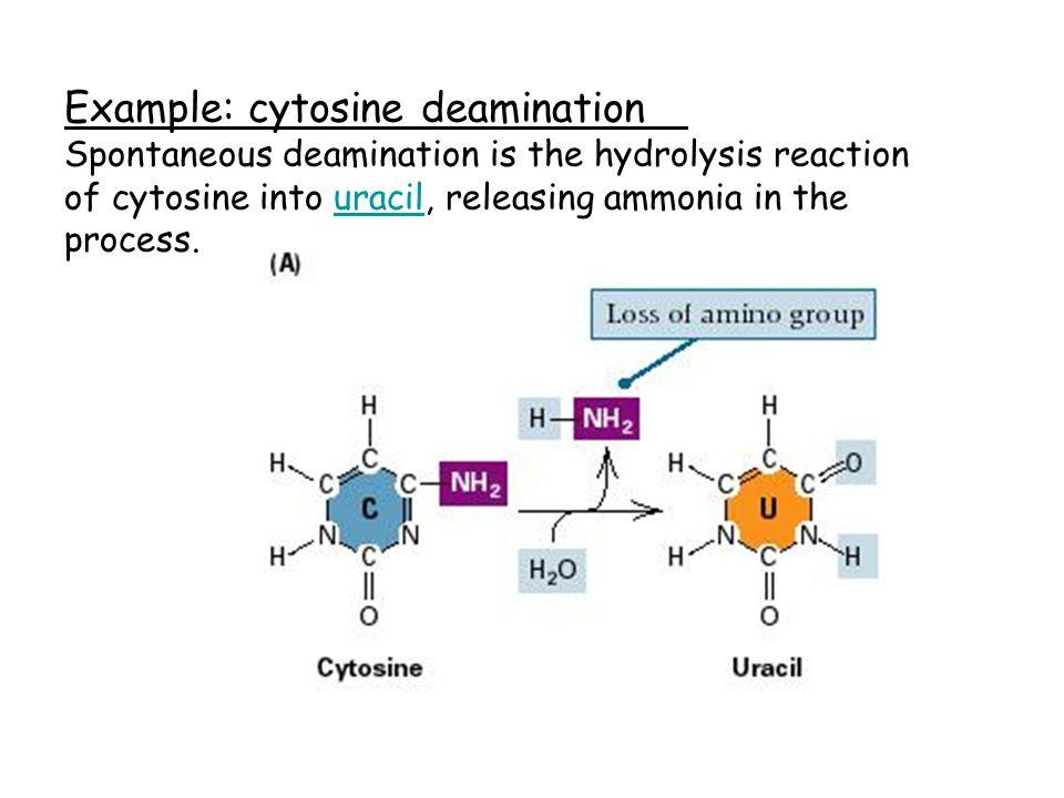 Example: cytosine deamination