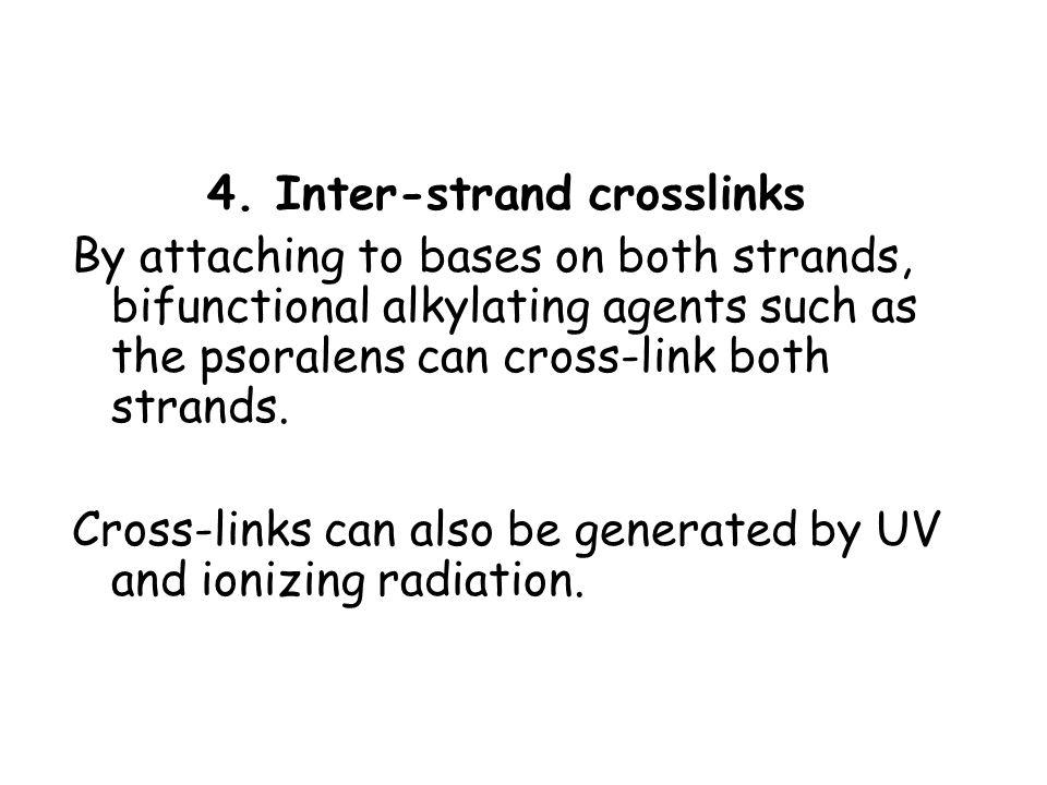 4. Inter-strand crosslinks