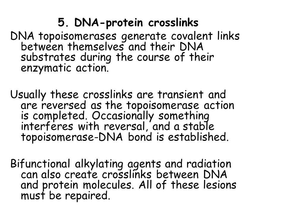 5. DNA-protein crosslinks