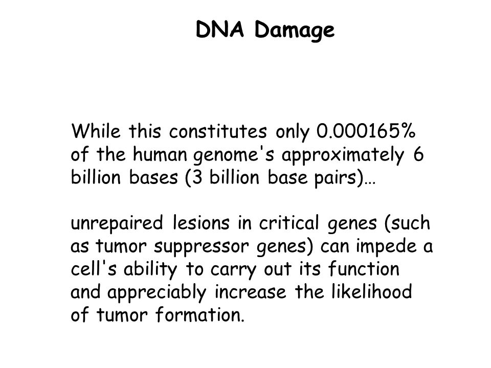 DNA Damage While this constitutes only 0.000165% of the human genome s approximately 6 billion bases (3 billion base pairs)…