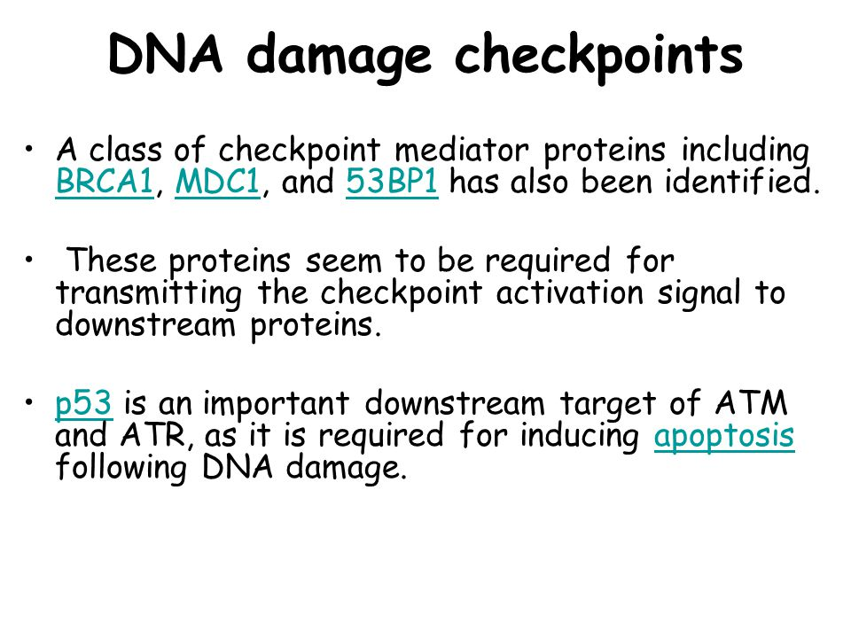 DNA damage checkpoints