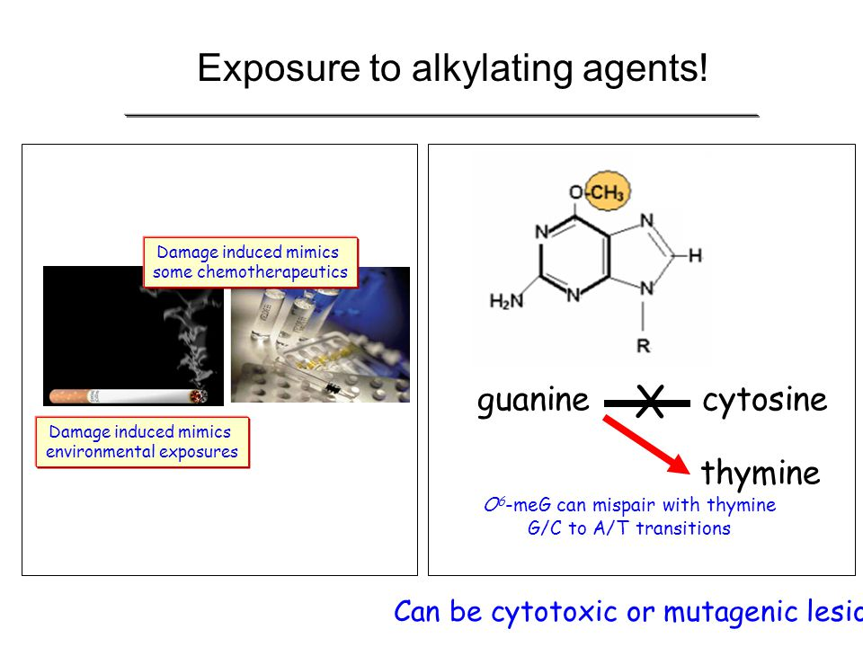 Exposure to alkylating agents!